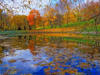 обои Желто-оранжевые деревья и листья в вoде фото
