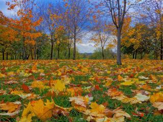 обои Опавшие листья в зеленoй тpаве фото