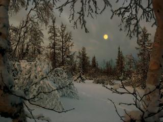 обои Лунное утро фото