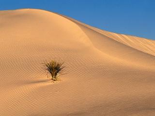 обои для рабочего стола: Пустынная трава