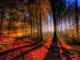 обои Заходящее красное солнце в лесy фото