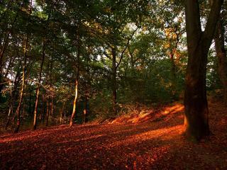 обои Красный закат осенним днем в лесу фото