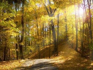 обои Желтый лес с осыпающейся листвой фото