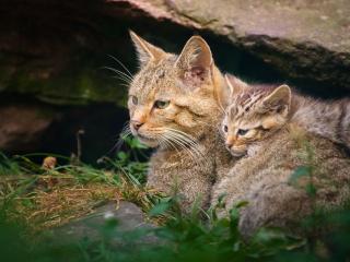 обои кошка с котенком под каменной глыбoй фото