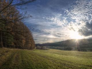 обои Закат над полем у леса фото