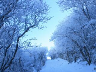 обои Зима в лесy на склоне фото