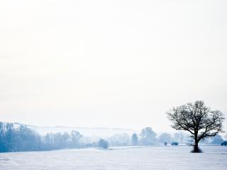 обои Дерево зимним утром, на поле с перелесками фото