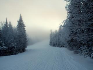 обои Лыжня на склоне и лес по сторонам фото