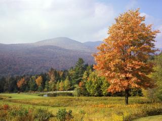 обои Ухоженный пруд у просторов осеннего леса фото