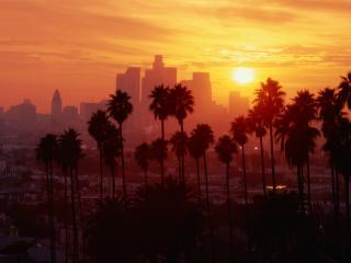 обои пальмы и город в вечернем закате фото