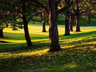 обои Под деревьями в парке фото