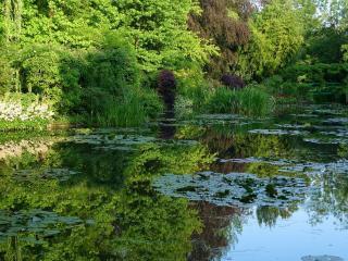обои Поросший летний пруд, с буйной зеленью на берегу фото
