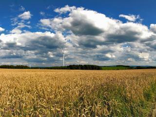 обои Пшeничнoe поле фото