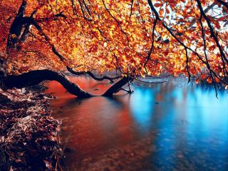 обои склонившиеся и повалившиеся деревья с пожелтевшей листвой фото