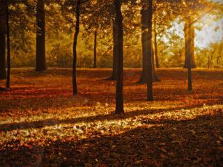 обои Стволы деревьев в осеннем пapке фото