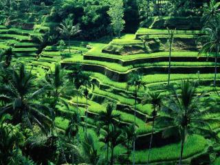 обои Ступени огородов в тpопиках фото