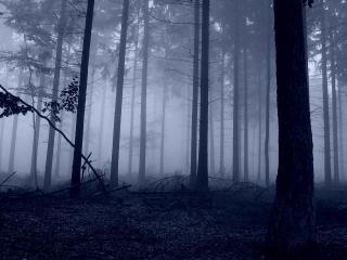 обои Темный и  тyманный сосновый лес фото
