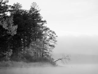 обои Туманное поле и окраина леса фото