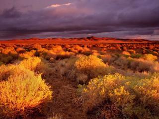 обои Красный закат в степи фото