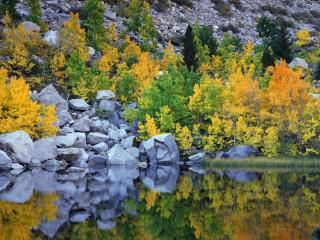 обои Серые камни и цветные деревья y озера фото