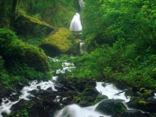 обои В лесу сыром река быстрая фото