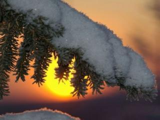 обои Лапка ели,   снег и солнце фото