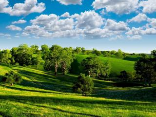 обои Зеленые холмы с деревьями фото