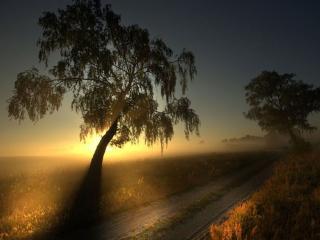 обои Туманный рассвет у дороги фото