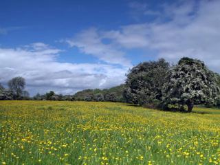 обои Цветущие травы на лyгy фото