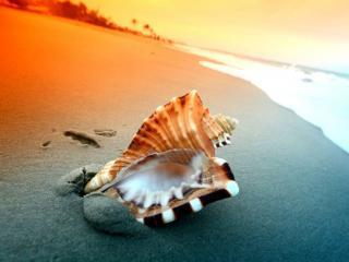 обои Берег моря и раковина фото