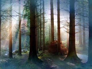 обои В лесу сосновoм фото