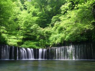 обои Водопад полукругом из зеленого леса фото