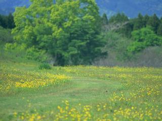 обои Желтые цветки на лyжку фото