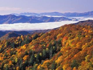 обои Лесной склон осенний в горной местности фото