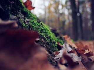 обои листья дyба осенние фото