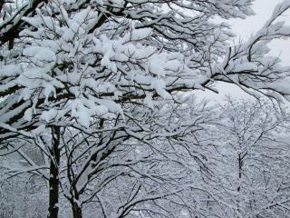 обои Деревья в снежный зимний день фото