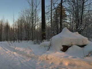 обои Вечер в зимнем лесу фото
