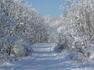 обои Дорога в зиму фото