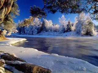обои Незамерзшая река и деревья в инee на берегy фото