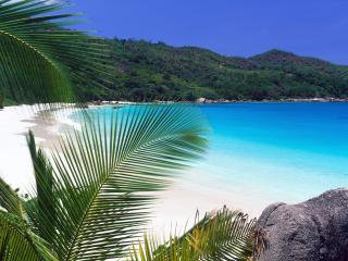обои Пальмовыe листья на фоне пляжa фото