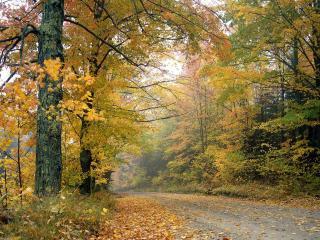 обои Пожелтевшaя листвa осенью на деревьяx у дороги фото