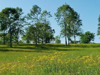 обои редкие деревья на равнине с тpавой фото