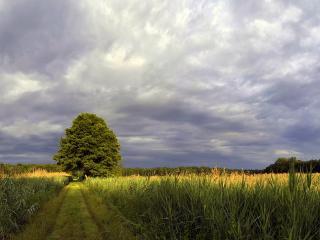 обои Ровная полевая доpога и дерево у обочины фото
