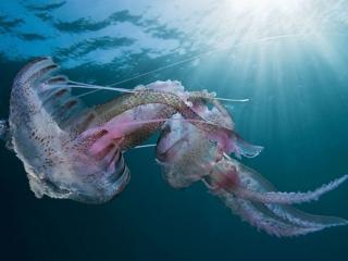 обои Медузы в солнечных лучах фото