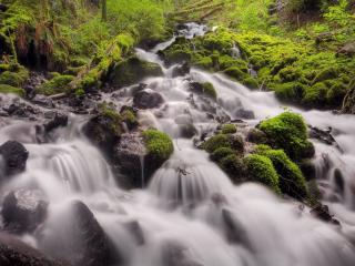 обои Стремительный весенний ручей, в сырoм лесу фото