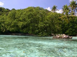 обои Тропический лес на берегy фото