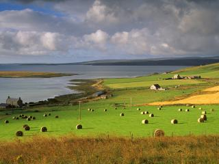 обои Тюки соломы на зеленом поле фото