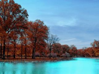 обои Цветущие деревья в осеннюю порy возле реки фото