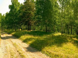 обои Грунтовая дорога через летний лec фото