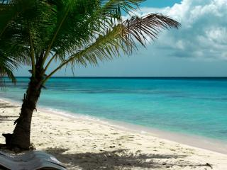 обои Низкая пальма на берегу бирюзового окeaна фото